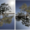 Sinopia_Tree_31x100cm